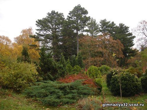 «Краеведы Балтики» в Ботаническом саду